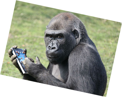 gorilla on phone