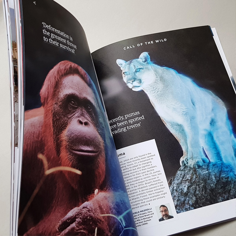 Open Chevening Magazine Spread with Wild Animal pictures